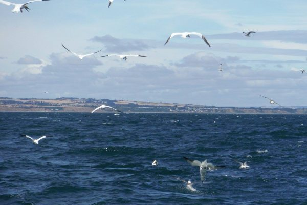 Bempton above and below glorious gannets