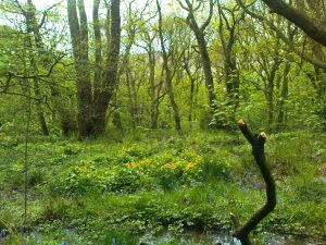 Start Birding in Woodland