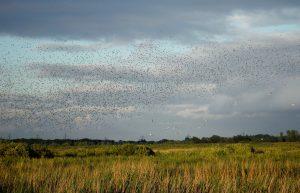 Start Birding August Newsletter