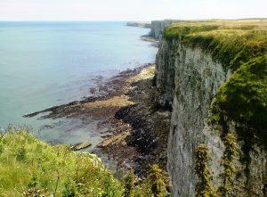Start Birding Coastal
