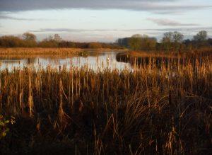 Start Birding in Wetland